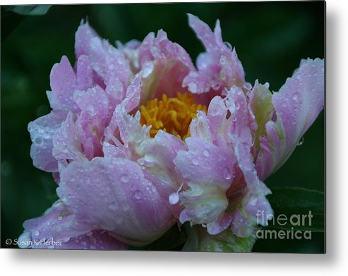 Flower Metal Print featuring the photograph Rain Tossed by Susan Herber