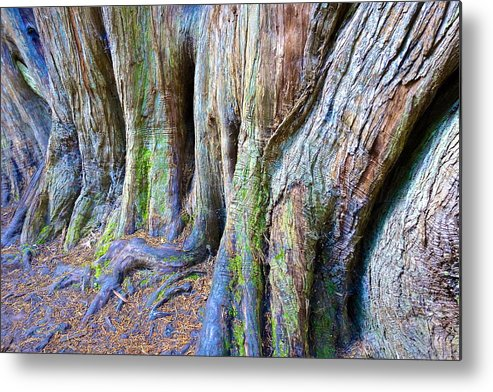 Tree Metal Print featuring the photograph Rainbow Tree by Charlie Brock