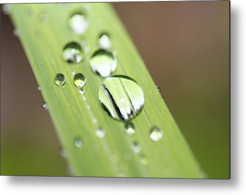 Flower Metal Print featuring the photograph Raindrops On Flower by Nick LaRocque