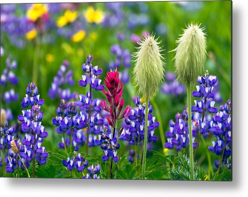 Alpine Metal Print featuring the photograph Rainier Wildflowers by Michael Russell