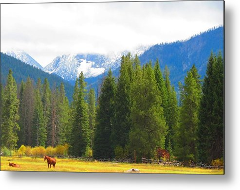 Great Divide Ranch Metal Print featuring the photograph Ranch Horses by Connor Ehlers