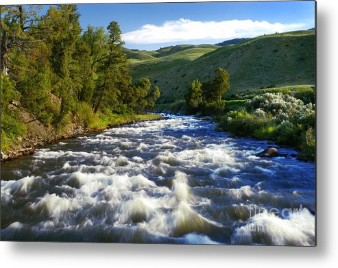 Yellowstone National Park Metal Print featuring the photograph Rapids In Yellowstone by Thomas Levine