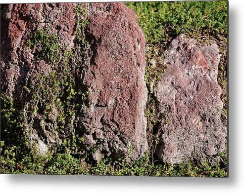 Linda Brody Metal Print featuring the photograph Red And Green by Linda Brody