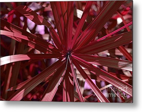 Michelle Meenawong Metal Print featuring the photograph Red Leaves by Michelle Meenawong