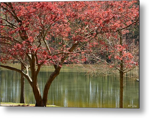 Red Maple Metal Print featuring the photograph Red Maple by Maria Urso