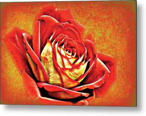 Flower Image Print Metal Print featuring the photograph Red Rosey by David Davies