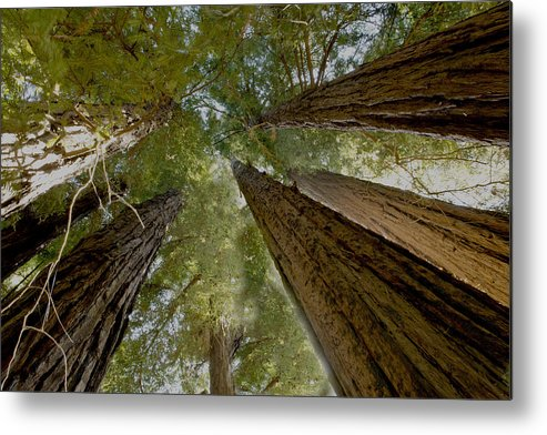 Mountains Metal Print featuring the photograph Redwood Canopy by Bryan Shane
