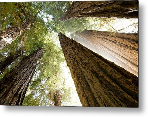Mountains Metal Print featuring the photograph Redwood Heaven by Bryan Shane