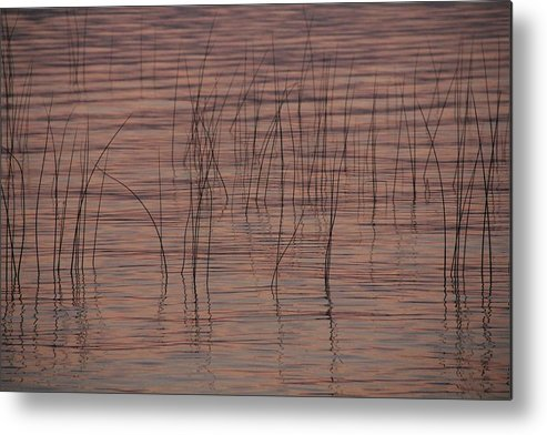 Water Metal Print featuring the photograph Reeds by Ramie Liddle