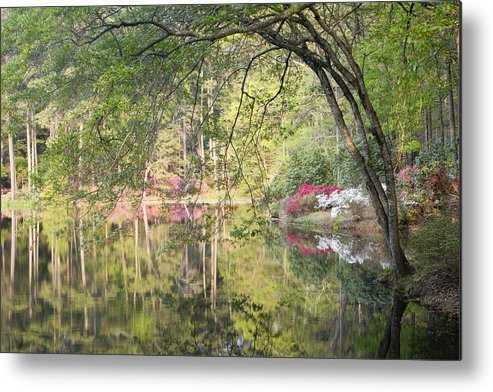 Azalea Metal Print featuring the photograph Reflection Pond by Eggers Photography