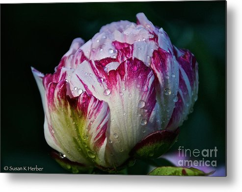 Flower Metal Print featuring the photograph Refreshing Outlook by Susan Herber