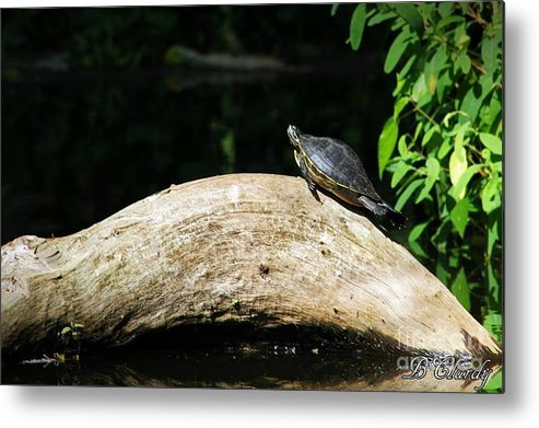 Nature Metal Print featuring the photograph Relaxin' by Bridget Clardy