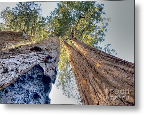 Mountains Metal Print featuring the photograph Renewal Of The Giants by Bryan Shane