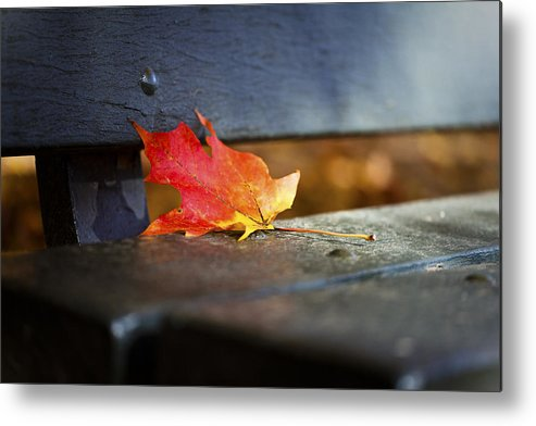 Leaf Metal Print featuring the photograph Resting by Viola Jasko