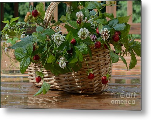 Flowers In A Basket Metal Print featuring the photograph Wild Strawberries And White Clover by Luv Photography