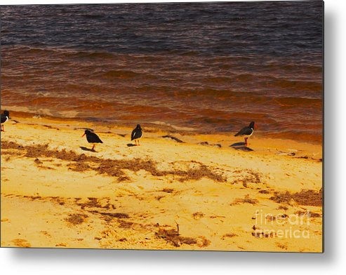 Bank Metal Print featuring the photograph Riverbank Birds by Cassandra Buckley