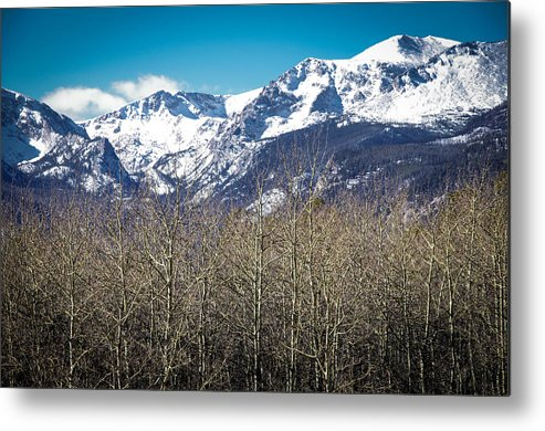 Mountain Metal Print featuring the photograph Rocky Mountain Woodland by Will Wagner