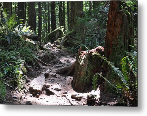 Forest Metal Print featuring the photograph Rocky Trail by Kirt Tisdale