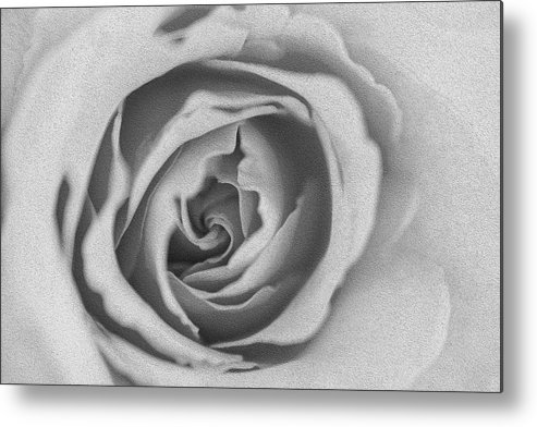 Rose Metal Print featuring the photograph Rose Digital Oil Paint by Vishwanath Bhat