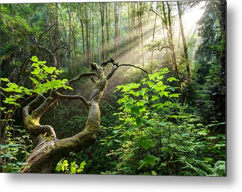 California Metal Print featuring the photograph Sacred Grove by Dustin LeFevre