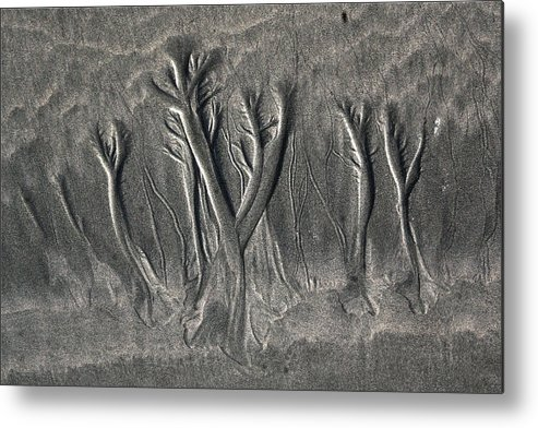 Sand Metal Print featuring the photograph Sand Trees by Alicia Kent