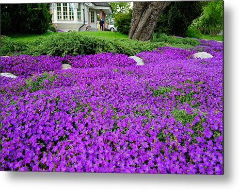 Sea Of Flowers Outside House And Garden Metal Print