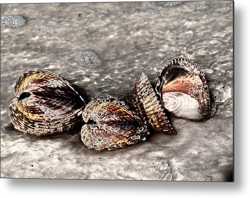 Sea Metal Print featuring the photograph Sea Shells 2 by Geraldine Alexander
