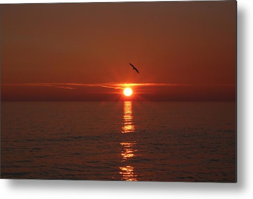 Sky Metal Print featuring the photograph Seagull by Cath Dupuy