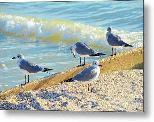 Shore Birds Metal Print featuring the photograph Seagulls On Wall by Carol McGunagle