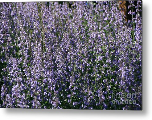 Flower Metal Print featuring the photograph Seeing Lavender by Susan Herber