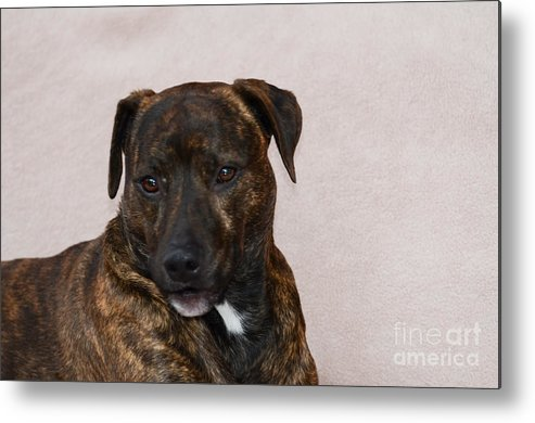 Shady Metal Print featuring the photograph Shady 2 by Judy Wolinsky