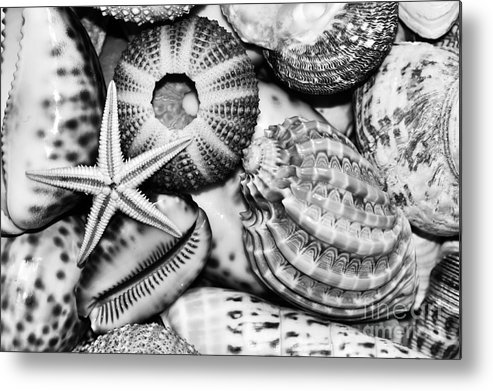 Photography Metal Print featuring the photograph Shellscape In Monochrome by Kaye Menner