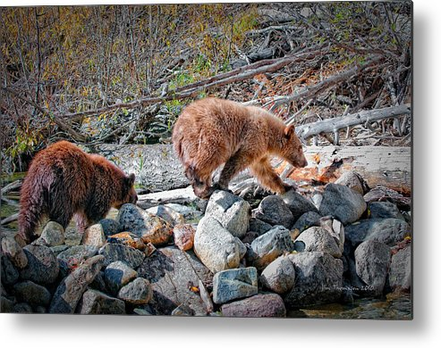Wildlife Metal Print featuring the photograph Siblings by Jim Thompson