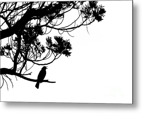 Animal Metal Print featuring the photograph Silhouette Of Singing Common Blackbird In A Tree by Stephan Pietzko