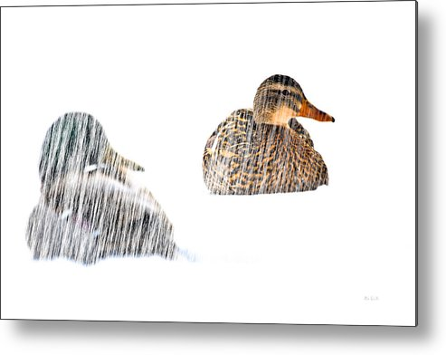 Duck Metal Print featuring the photograph Sitting Ducks In A Blizzard by Bob Orsillo