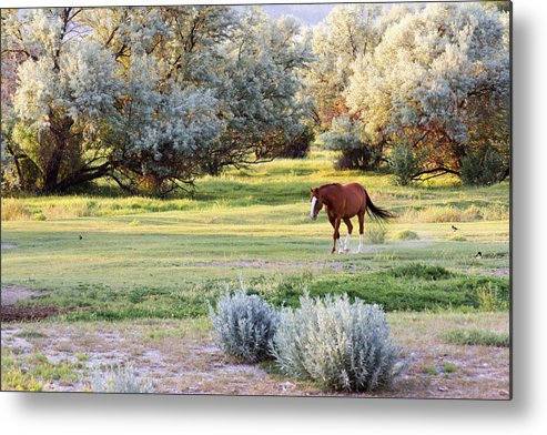 Horses Metal Print featuring the photograph Slow And Easy by Dana Moyer