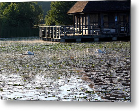 Summer Metal Print featuring the photograph Slow Morning by Jodi Adamowicz