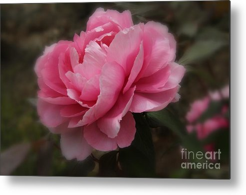 Pink Metal Print featuring the photograph Soft Focus Pink by Yumi Johnson