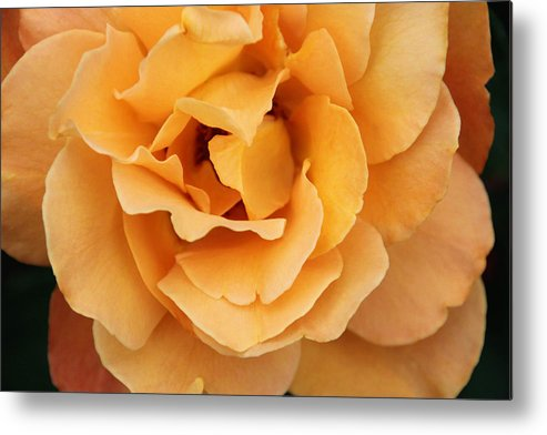 Yellow Metal Print featuring the photograph Soft Yellow by Julie L Williams