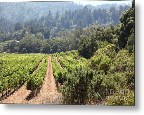 Vineyard Metal Print featuring the photograph Sonoma Vineyards In The Sonoma California Wine Country 5d24518 by Wingsdomain Art and Photography