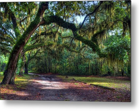 Spanish Moss Metal Print featuring the photograph Spanish Moss by Mel Steinhauer