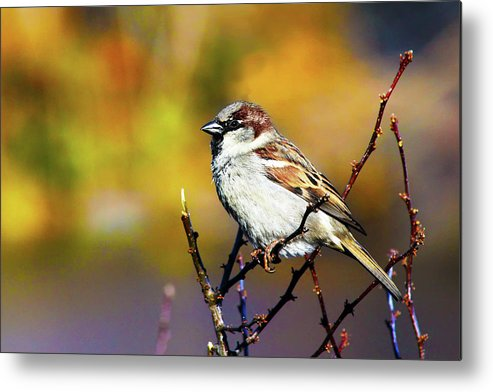 Adorable Metal Print featuring the photograph Sparrow In The Park by Artistic Photos