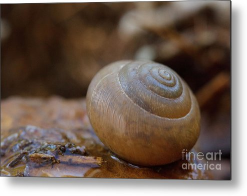 Snail Metal Print featuring the photograph Spiral by Sharon Gartrell