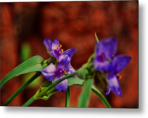 Flowers Metal Print featuring the photograph Spring In Medicine Park by Toni Hopper