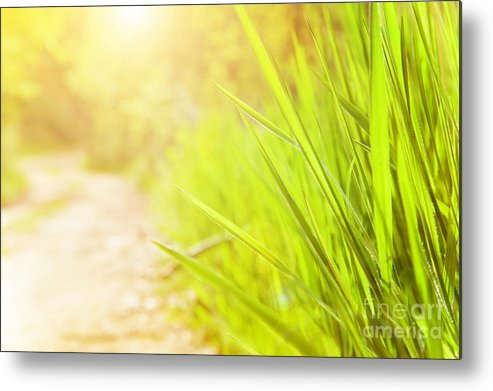 Beautiful Metal Print featuring the photograph Spring Sunny Day by Anna Om