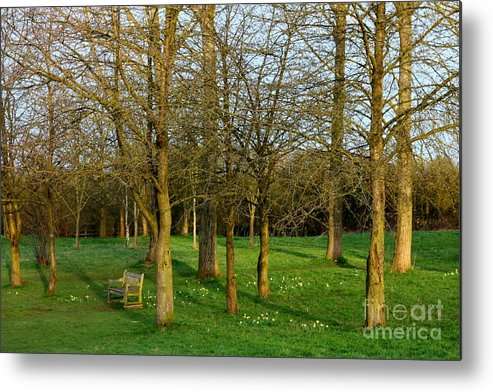 Canon Eos 450d Metal Print featuring the photograph Spring Sunshine In The Trees by Jeremy Hayden