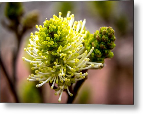 Bush Metal Print featuring the photograph Sprouts On A Bush by Debbie Orlando