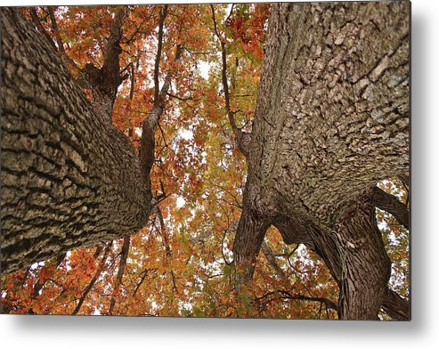 Oak Trees Metal Print featuring the photograph Squirrel's Vision Of A Good Day by Mike Flake