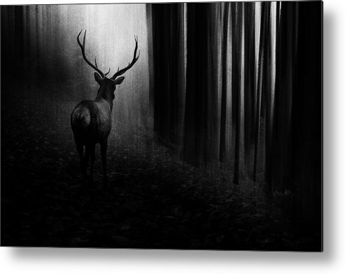 Stag Metal Print featuring the photograph Stag by Doris Reindl