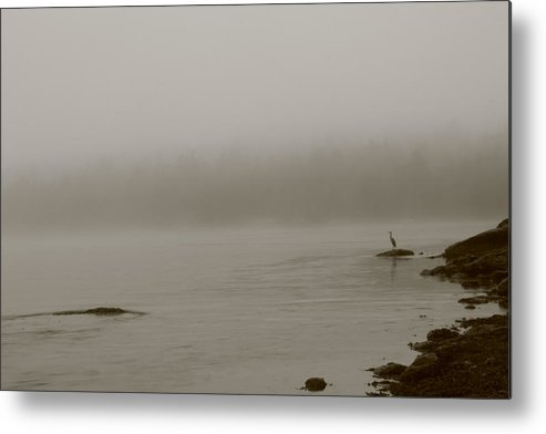 Water Metal Print featuring the photograph Standing Watch In The Fog by Greg DeBeck